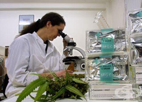 Течна медицинска марихуана намалява епилептичните пристъпи - изображение