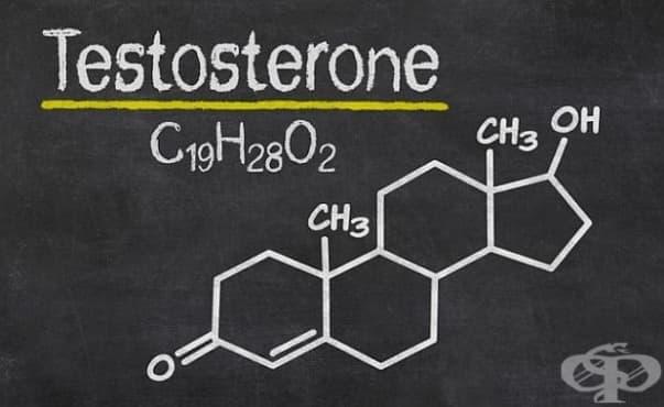 Тестостеронът може да е ключът към лечението на множествената склероза - изображение