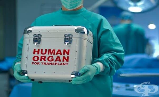 Слабата организация е проблемът с донорството у нас - изображение