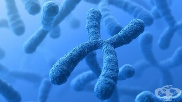 Учени: Y-хромозомата мутира и може да доведе до изчезването на мъжете - изображение