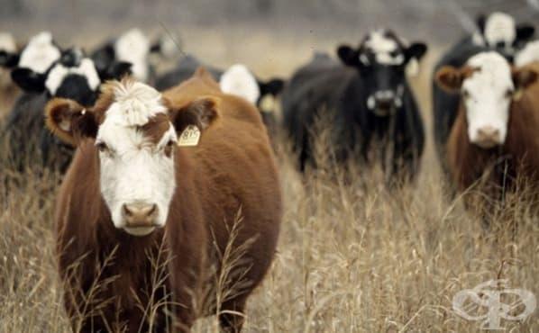 Забраняват пазари и изложби с животни във Видин заради нодуларния дерматит - изображение