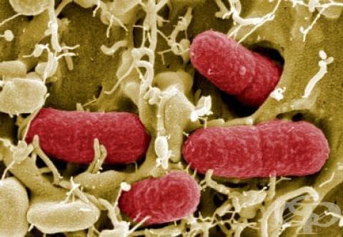 И вторите проби за опасната бактерия Е Коли са отрицателни - изображение
