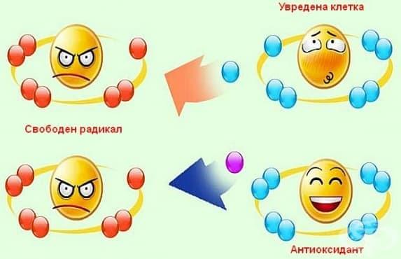 Антиоксиданти - изображение