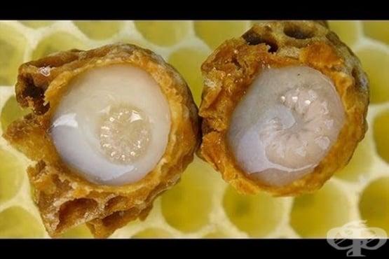 Същност и полезни свойства на пчелното млечице - изображение