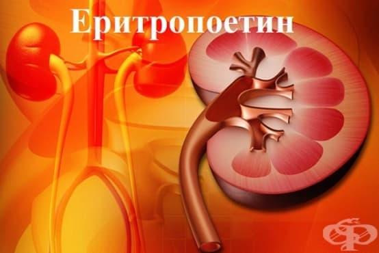 Еритропоетин - изображение