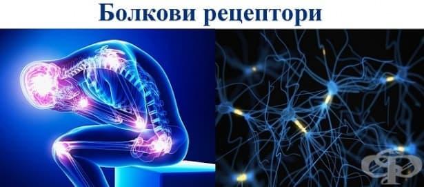 Болкови рецептори (ноцирецептори) - изображение