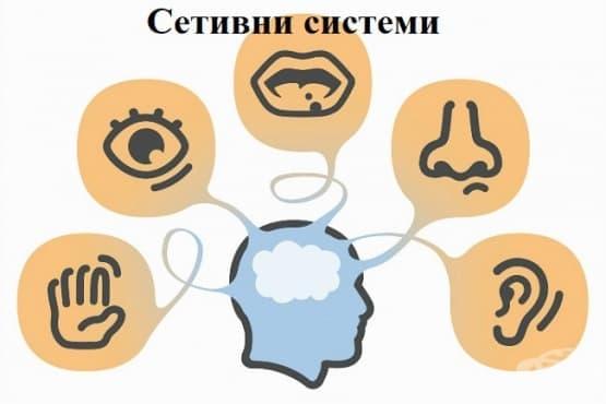 Сетивни системи - изображение