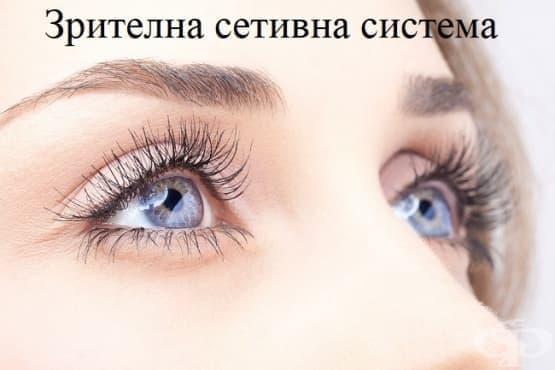 Зрителна сетивна система - изображение