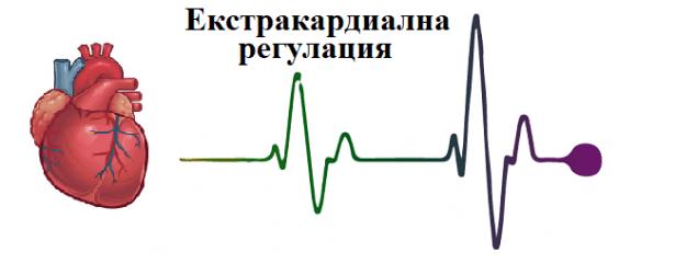 Екстракардиална регулация - изображение