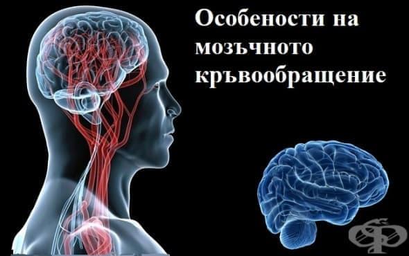 Особености на мозъчното кръвообращение - изображение
