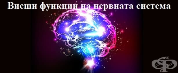 Висши функции на нервната система - изображение