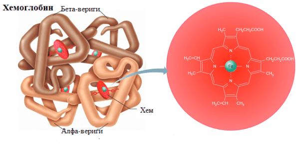 Свойства и значение на хемоглобина - изображение