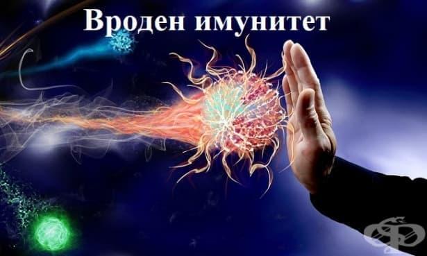 Вроден имунитет - изображение