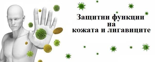 Защитни функции на кожата и лигавиците - изображение