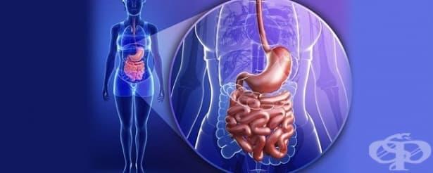 Значение на видовете движения в храносмилателната система - изображение