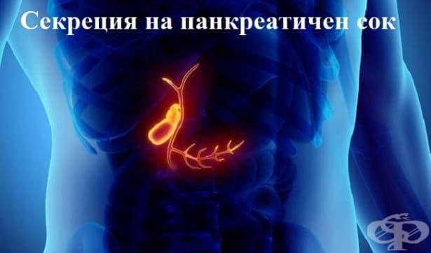 Секреция на панкреатичен сок - изображение