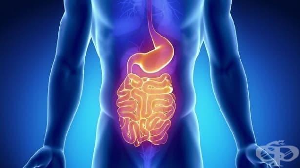 Значение на секреторната активност в храносмилателната система - изображение