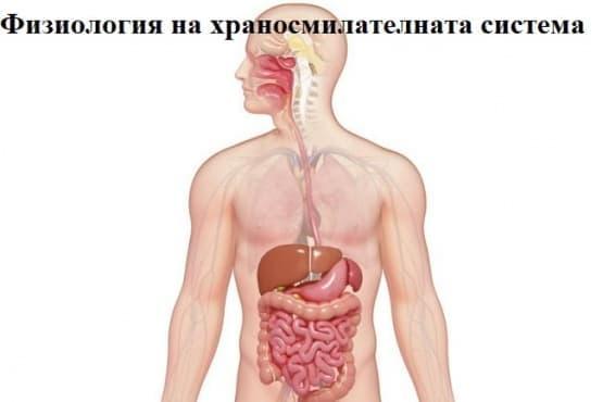 Физиология на храносмилателната система - изображение