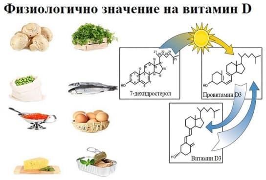 Физиологично значение на витамин D - изображение