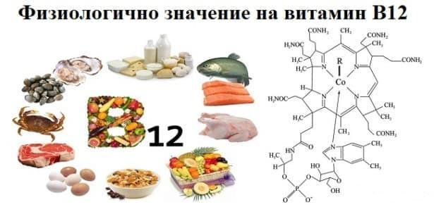 Физиологично значение на витамин В12 - изображение