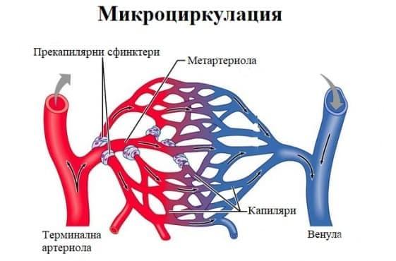 Микроциркулация - изображение