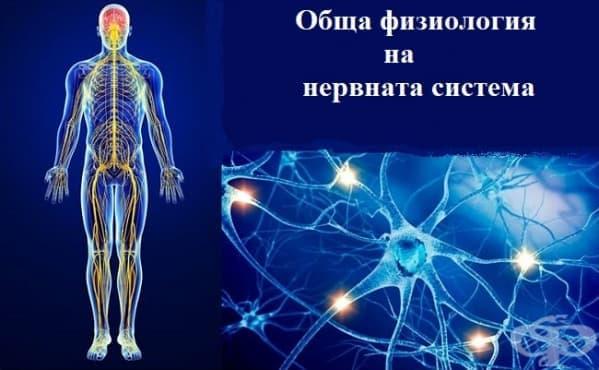 Обща физиология на нервната система - изображение