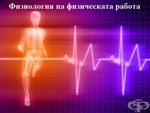 Физиология на физическата работа - изображение