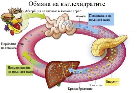 Обмяна на въглехидратите - изображение