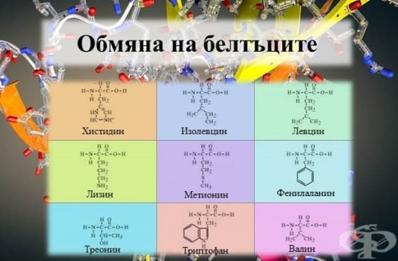 Обмяна на белтъците - изображение
