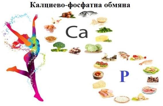 Калциево-фосфатна обмяна - изображение