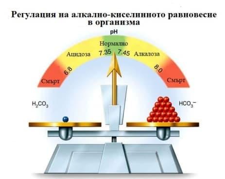 Регулация на алкално-киселинното равновесие - изображение