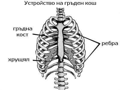 Устройство на гръдния кош - изображение