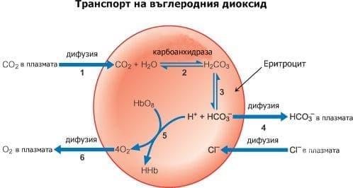 Транспорт на въглеродния диоксид - изображение