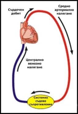 Средно артериално налягане - изображение