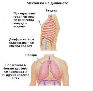 Механика на дишането - изображение