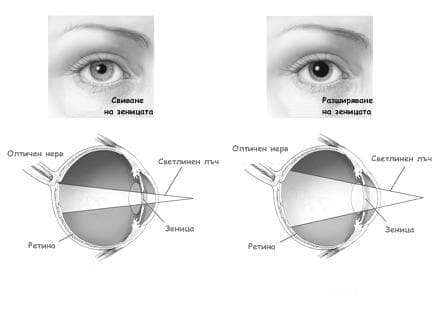 Светлинна адаптация на окото - изображение