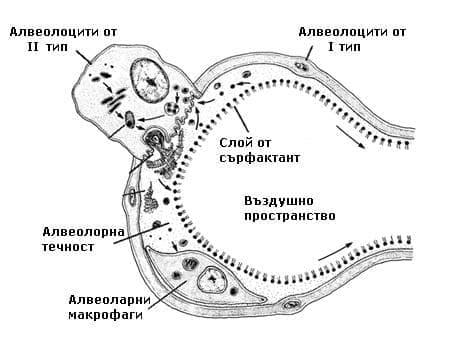 Значение на сърфактанта - изображение