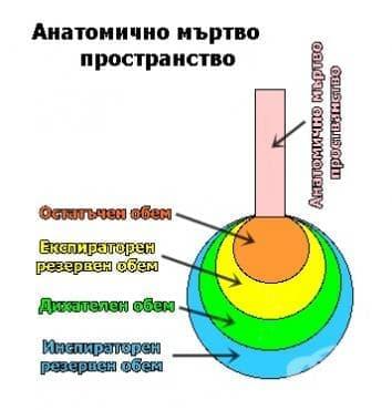Анатомично мъртво пространство - изображение