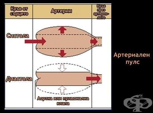 Артериален пулс - изображение