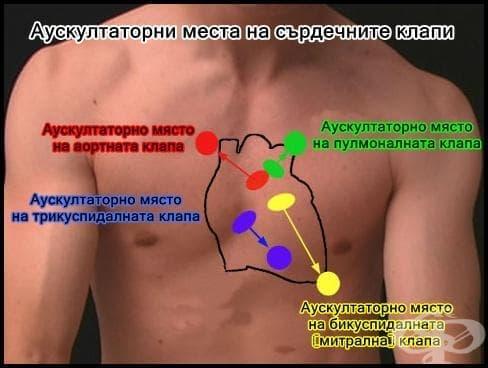 Аускултационни места на сърдечните клапи - изображение