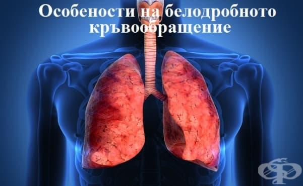 Особености на белодробното кръвообращение - изображение