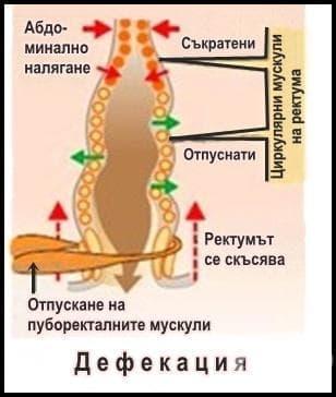 Дефекация - изображение