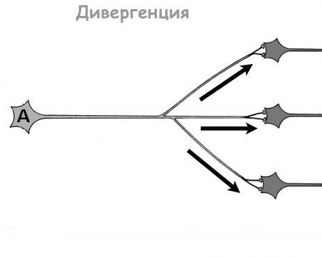 Дивергенция - изображение
