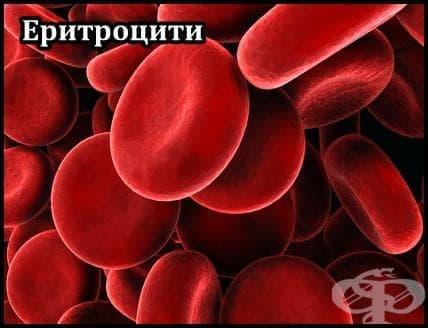 Еритроцити - изображение
