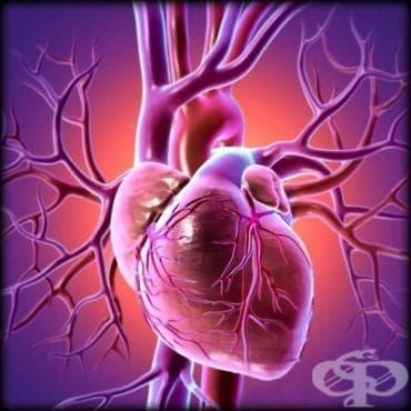 Физиология на сърдечно-съдовата система - изображение