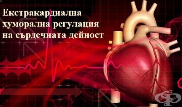 Екстракардиална хуморална регулация на сърдечната дейност - изображение