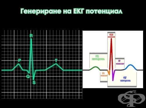 Генериране на ЕКГ потенциал - изображение