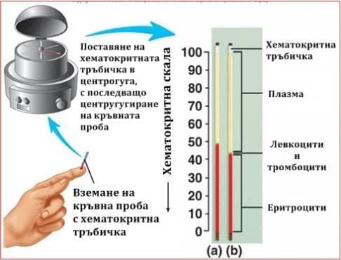 Хематокрит - изображение