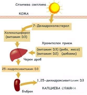 Хормонална функция на кожата - изображение