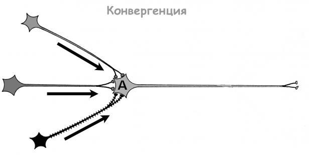 Конвергенция - изображение